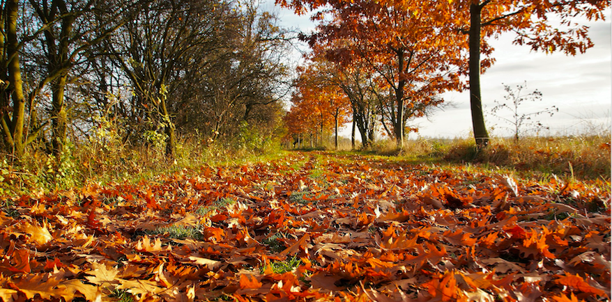 Varför hösten är bra tid att se sig om efter nytt jobb…